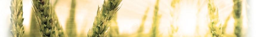 cropped-background-harvest1.jpg
